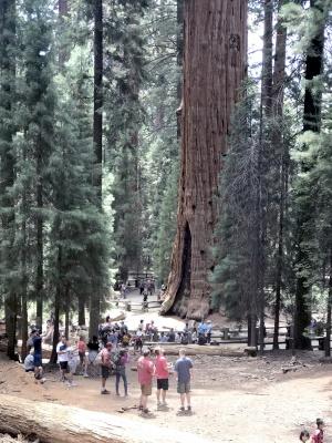 巨木1.jpg