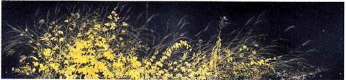 草の実.jpg