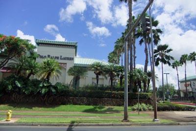 Hawaii2-7pine.jpg