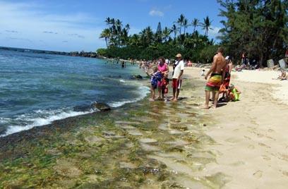 Hawaii2-kame3.jpg
