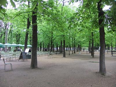 des arbres.JPG