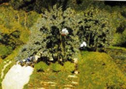 m_Bonnard.jpg